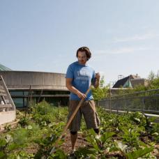 Man gardening on top of Trent University roof